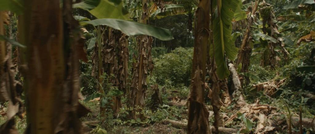 17_jungle2
